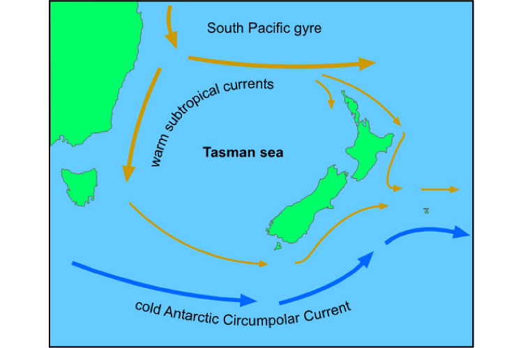 Click image for larger version  Name:NZ ocean currents.jpg Views:182 Size:159.7 KB ID:64569