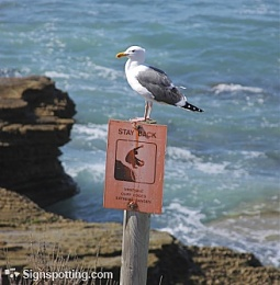 Click image for larger version  Name:Warning! killer seagulls.jpg Views:147 Size:41.3 KB ID:65707