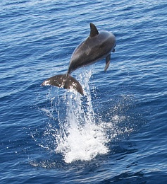 Click image for larger version  Name:dolphin.jpg Views:128 Size:165.4 KB ID:6710
