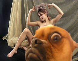 Click image for larger version  Name:Dam dog.jpg Views:289 Size:69.2 KB ID:71744