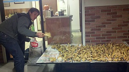 Click image for larger version  Name:chantrelles2013-11-21_22-07-56_299.jpg Views:127 Size:406.4 KB ID:72406