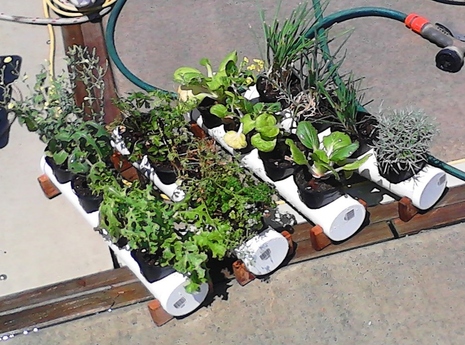Click image for larger version  Name:Boat Garden.jpg Views:576 Size:231.3 KB ID:74940