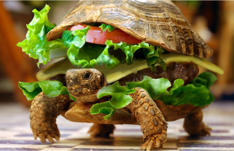 Click image for larger version  Name:Yum Yum.jpg Views:178 Size:89.5 KB ID:75056