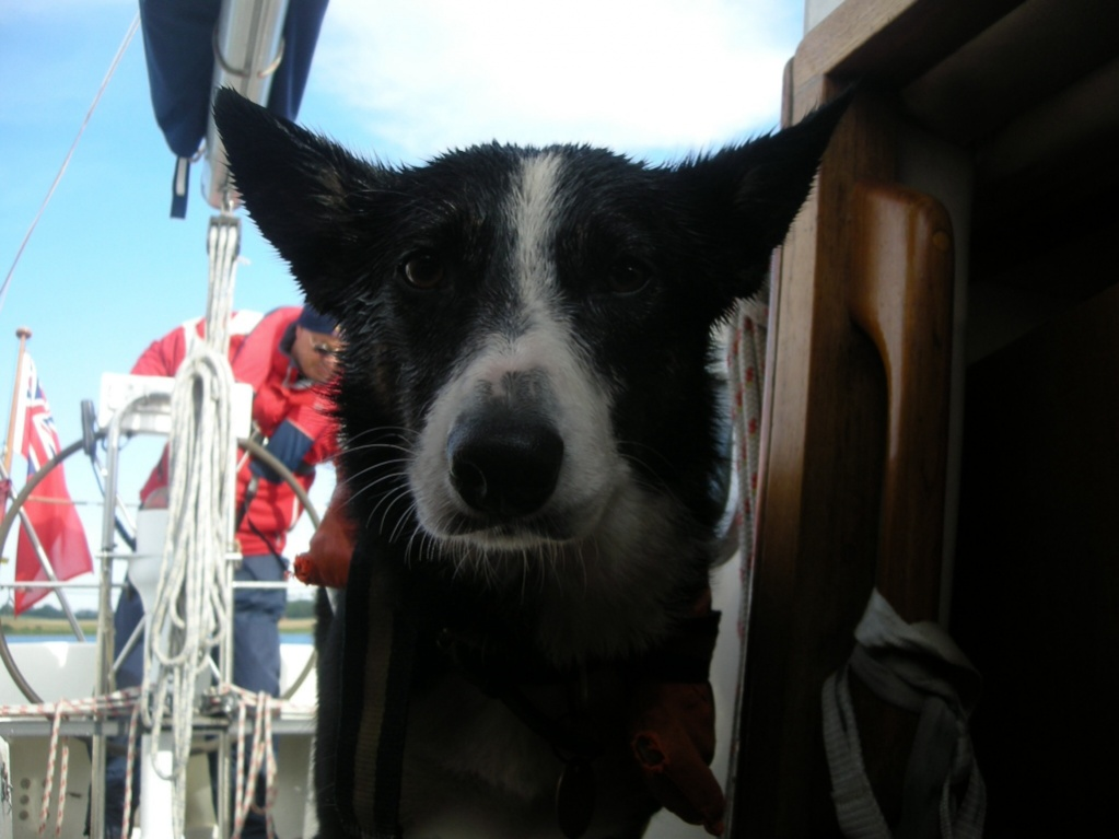 Click image for larger version  Name:ImageUploadedByCruisers Sailing Forum1392668644.374204.jpg Views:116 Size:161.9 KB ID:76347