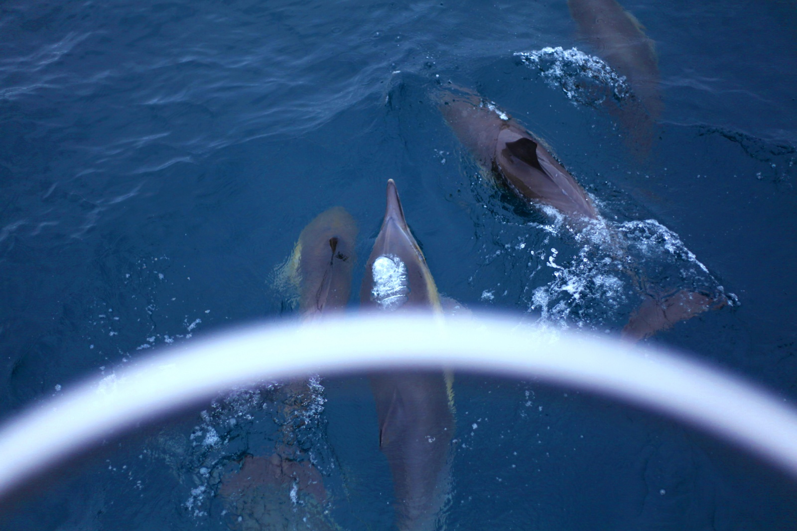 Click image for larger version  Name:Dolphine.jpg Views:232 Size:393.0 KB ID:77511