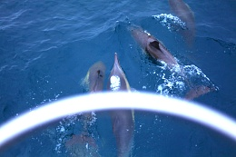 Click image for larger version  Name:Dolphine.jpg Views:267 Size:393.0 KB ID:77511