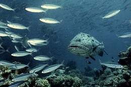 Click image for larger version  Name:Potato Cod.jpg Views:155 Size:31.6 KB ID:82214