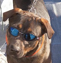 Click image for larger version  Name:jazmin sunglasses_Medium.jpg Views:164 Size:205.8 KB ID:86908