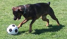 Click image for larger version  Name:jazmin soccer_Medium.jpg Views:147 Size:94.1 KB ID:86909