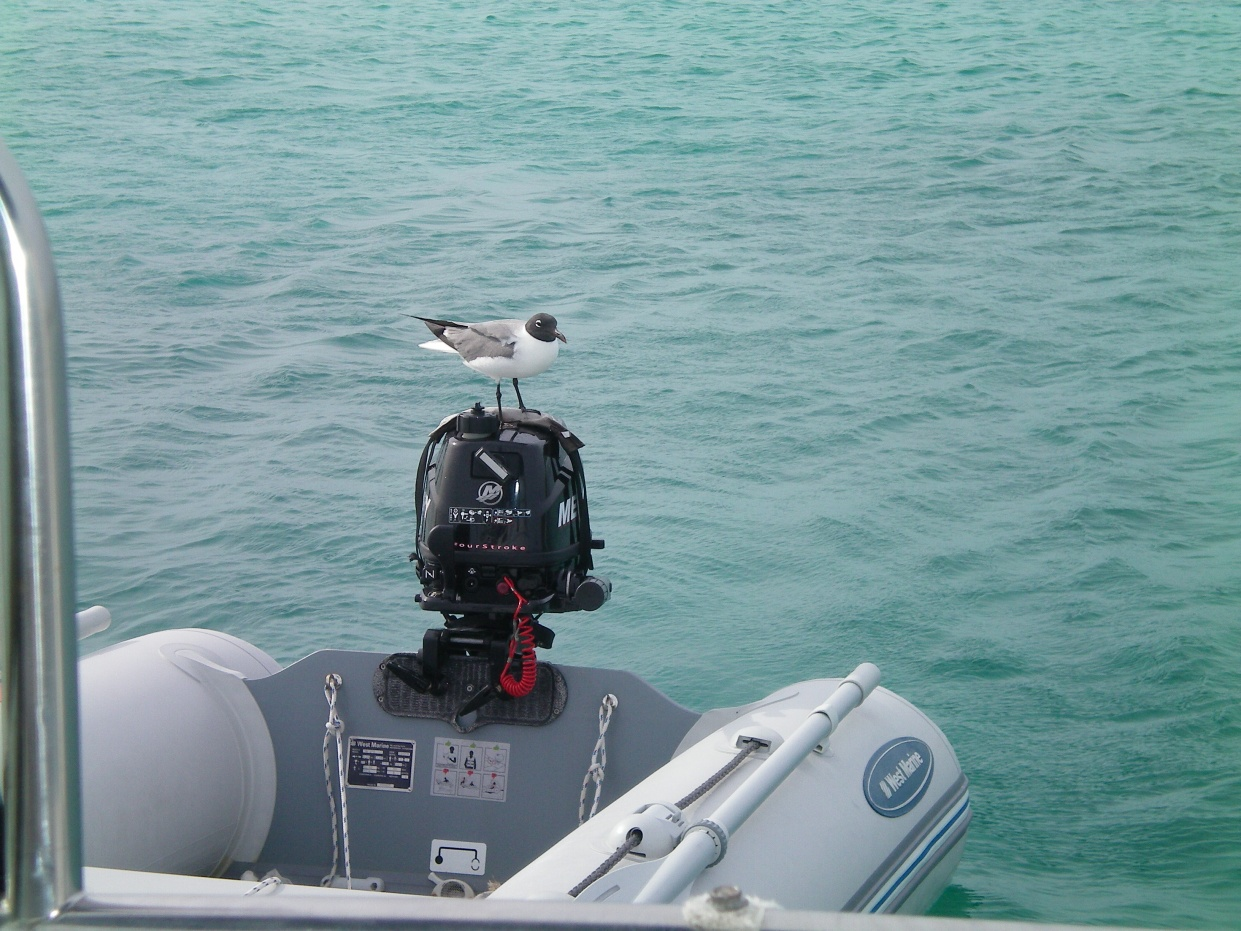 Click image for larger version  Name:seagull on dinghy.jpg Views:66 Size:410.0 KB ID:88687