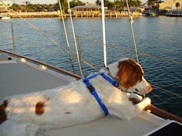 Click image for larger version  Name:Roxy cooling it.jpg Views:174 Size:47.5 KB ID:9312