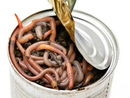 Click image for larger version  Name:can-of-worms.jpg Views:53 Size:27.2 KB ID:93178