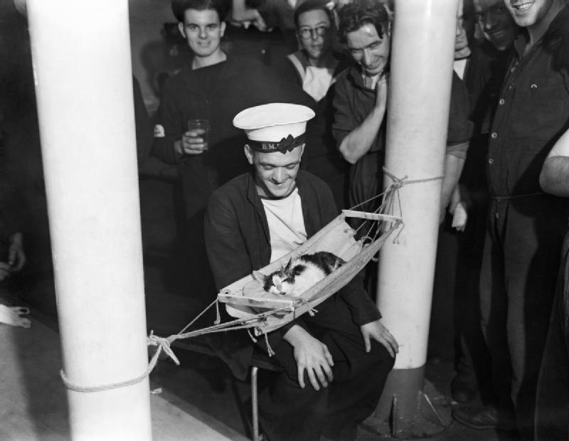 Click image for larger version  Name:Hammock Ships Cat.jpg Views:398 Size:47.7 KB ID:93647