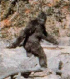 Click image for larger version  Name:bigfoot.jpg Views:114 Size:12.8 KB ID:97104