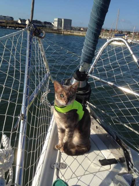 Click image for larger version  Name:ImageUploadedByCruisers Sailing Forum1424971821.700392.jpg Views:71 Size:51.0 KB ID:97957