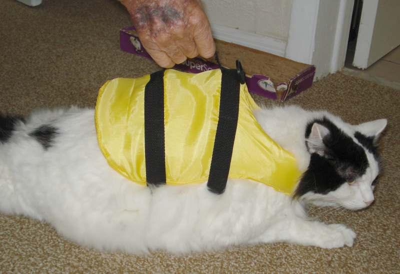 Click image for larger version  Name:Cat  LifeJacket 6632.JPG Views:182 Size:42.1 KB ID:99604