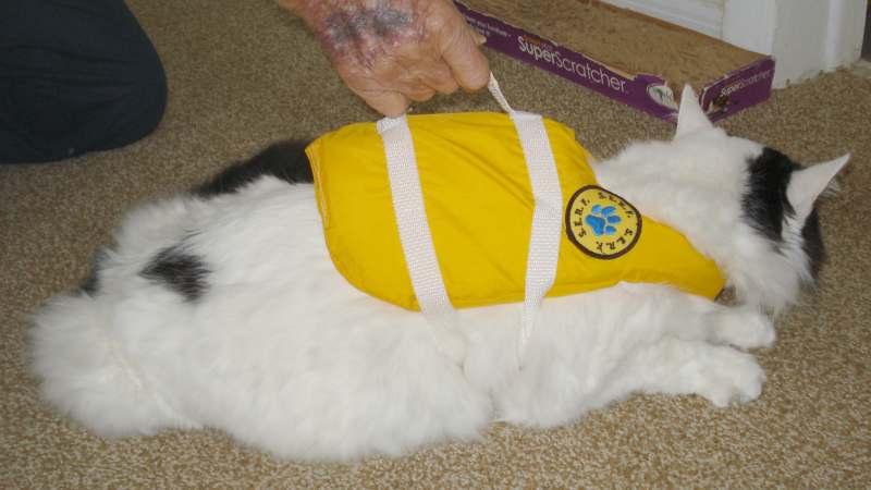 Click image for larger version  Name:Cat LifeJacket SERF 6634.JPG Views:105 Size:35.6 KB ID:99605