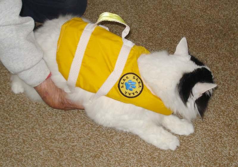 Click image for larger version  Name:Cat LifeJacket SERF 6635.JPG Views:128 Size:56.1 KB ID:99606