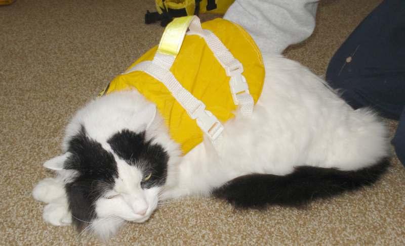 Click image for larger version  Name:Cat LifeJacket SERF 6636.JPG Views:184 Size:40.4 KB ID:99607