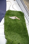 The perfect doggy pee mat :)