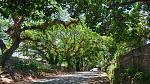 The road to Bais, Negros Oriental, Philippines