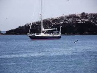 For those interested in Ron Holland designed sailboats  esp. the RH 43 which only thirteen, all custom ordered to owner specifications of these, high quality boats were produced....