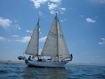 Petrel, a Sea Spirit