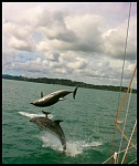 Bay of Islands Dolphins
