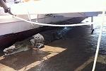 Croc under boat